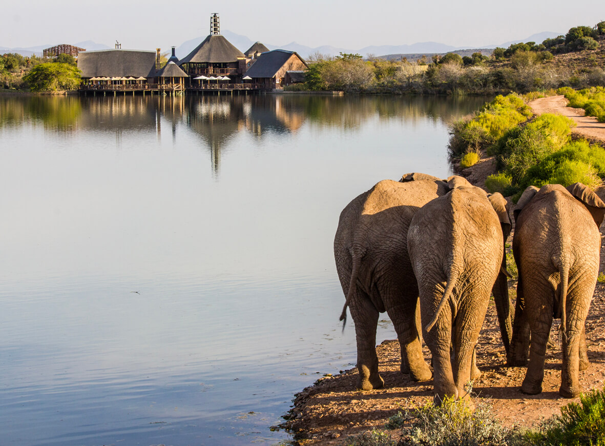 A stunning view of the game from across Buffelsdrift lodge