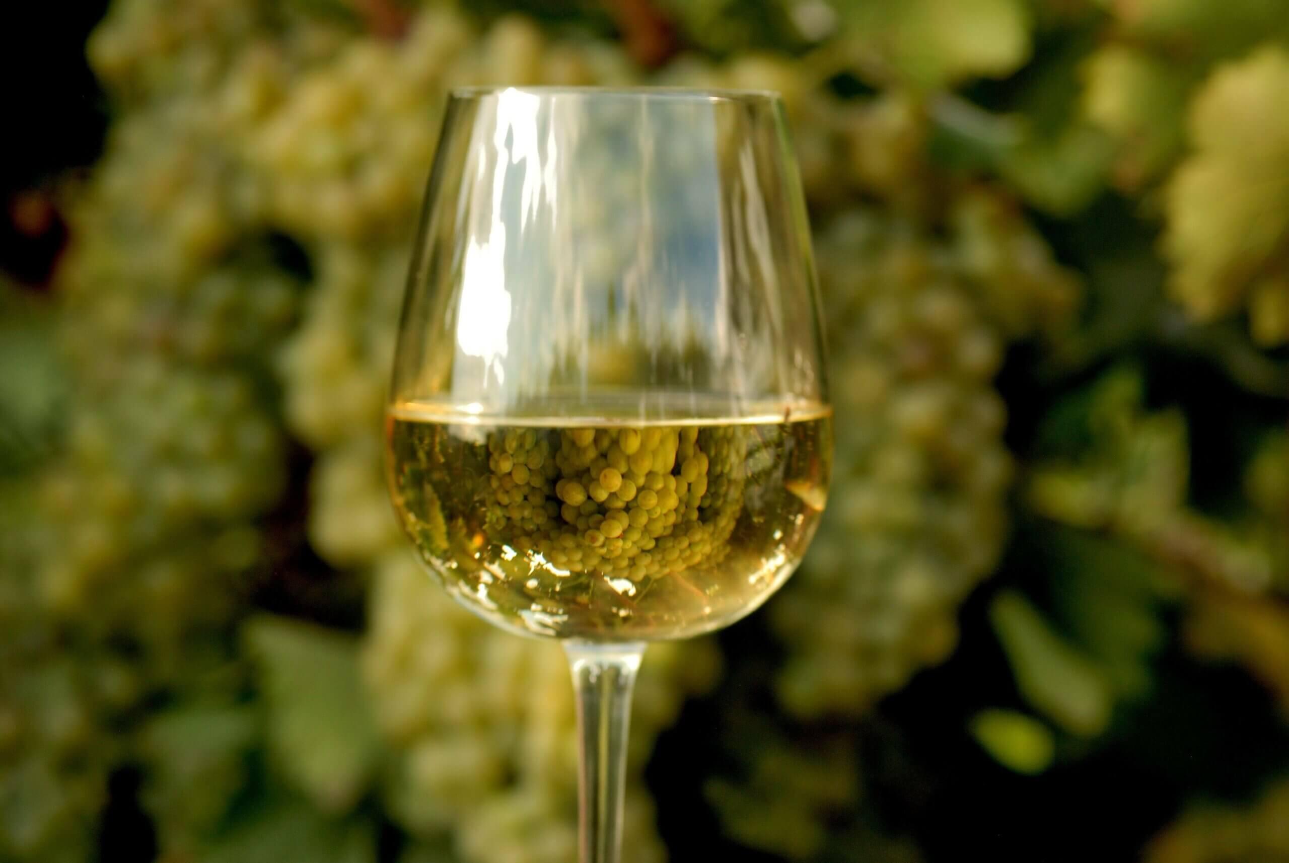 Sip & Read | Chardonnay Day