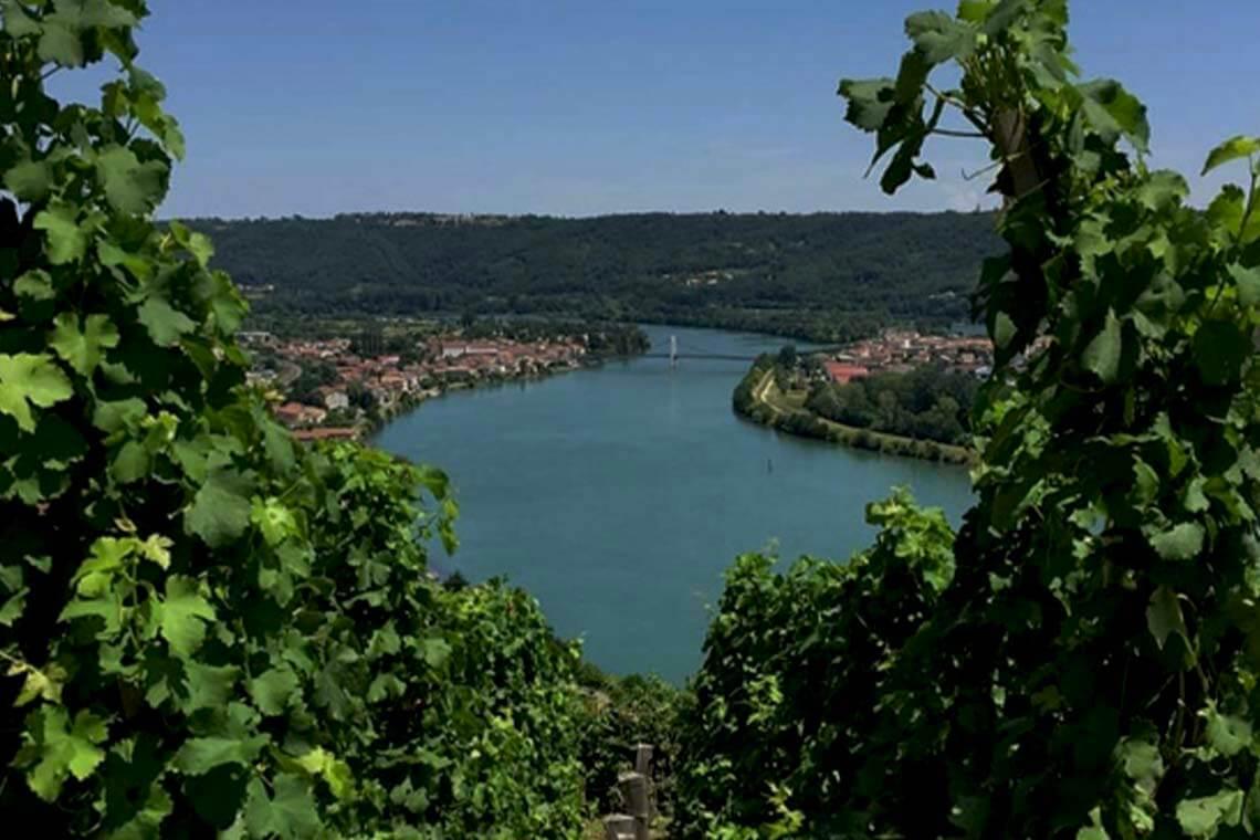 Sip & Read   J.Denuzière vineyards