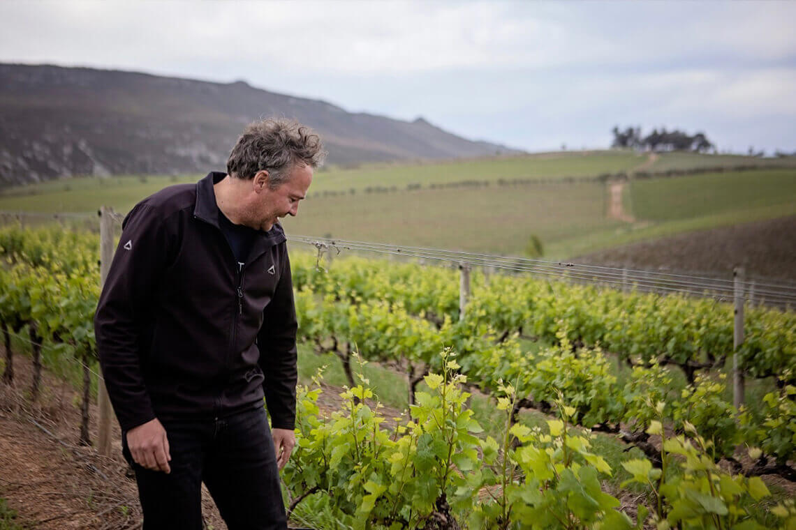 Sip & Read   Pinot Noir Vineyards