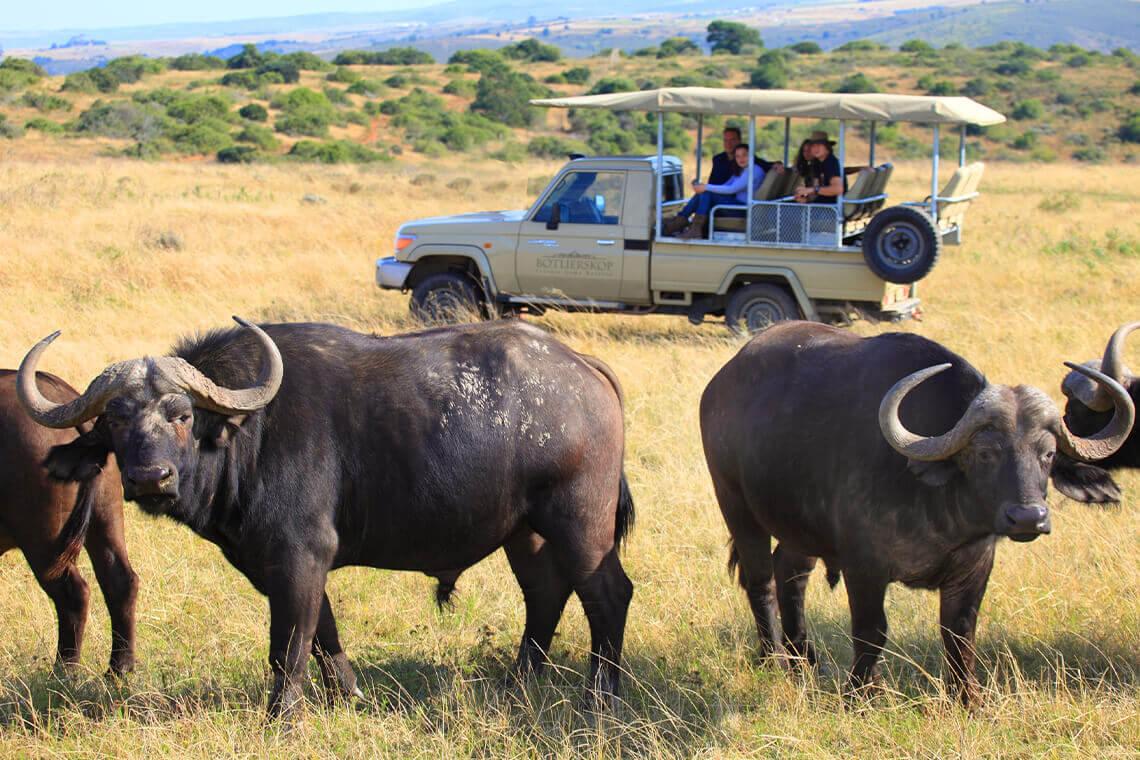 Sip & Read   Buffalos