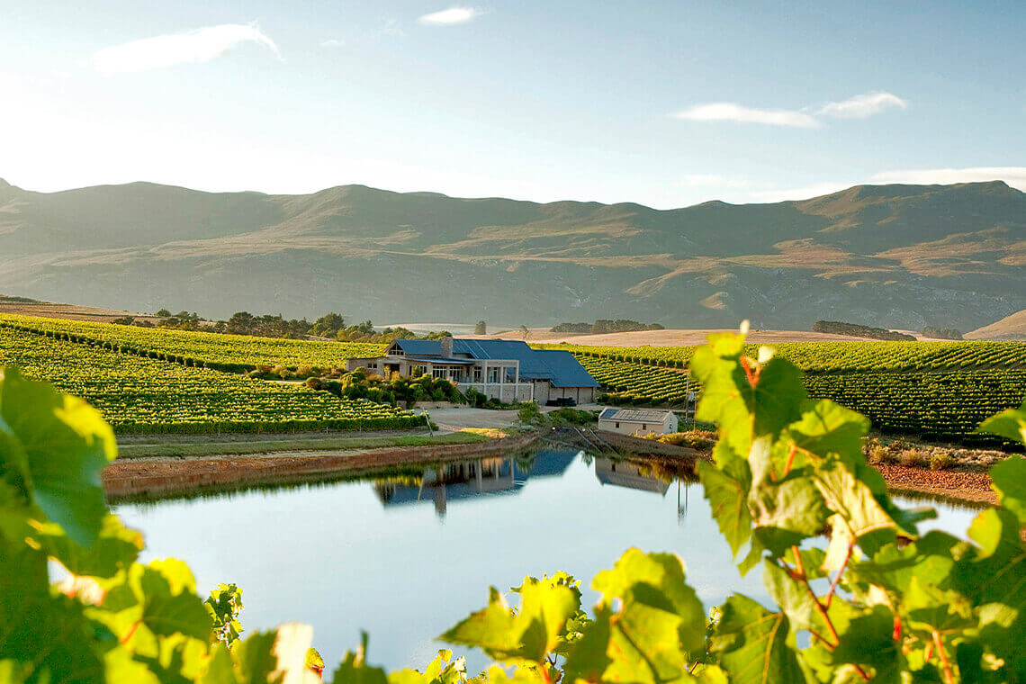 Sip & Read | Creation winery