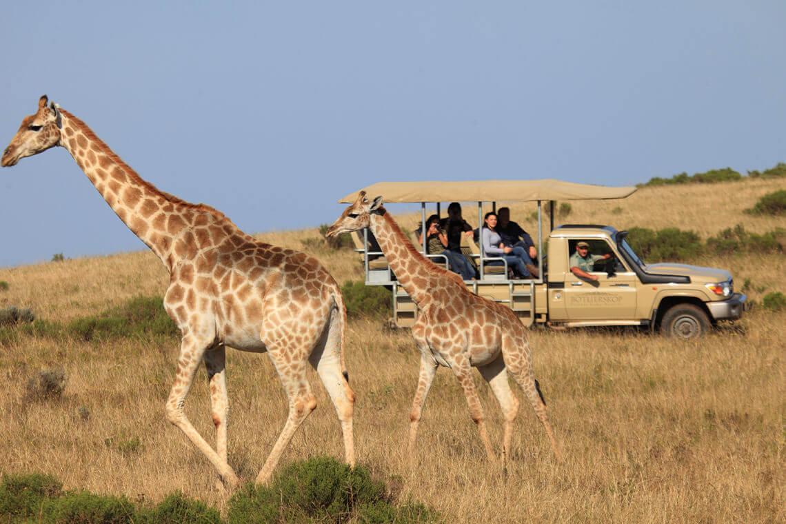 Sip & Read   Giraffes