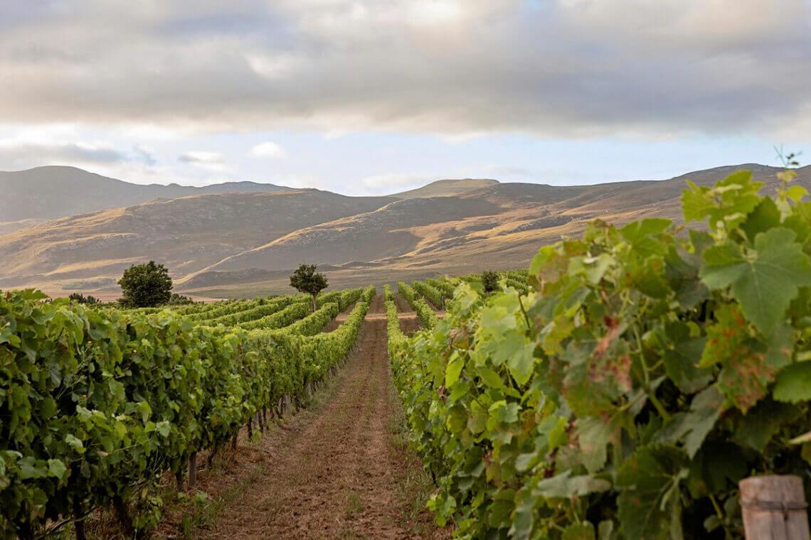 Sip & Read | Creation Vineyards