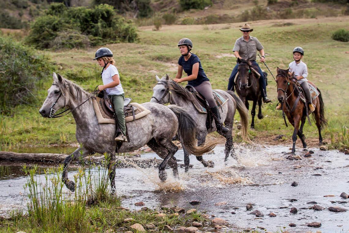 Sip & Read   Horseback safaris