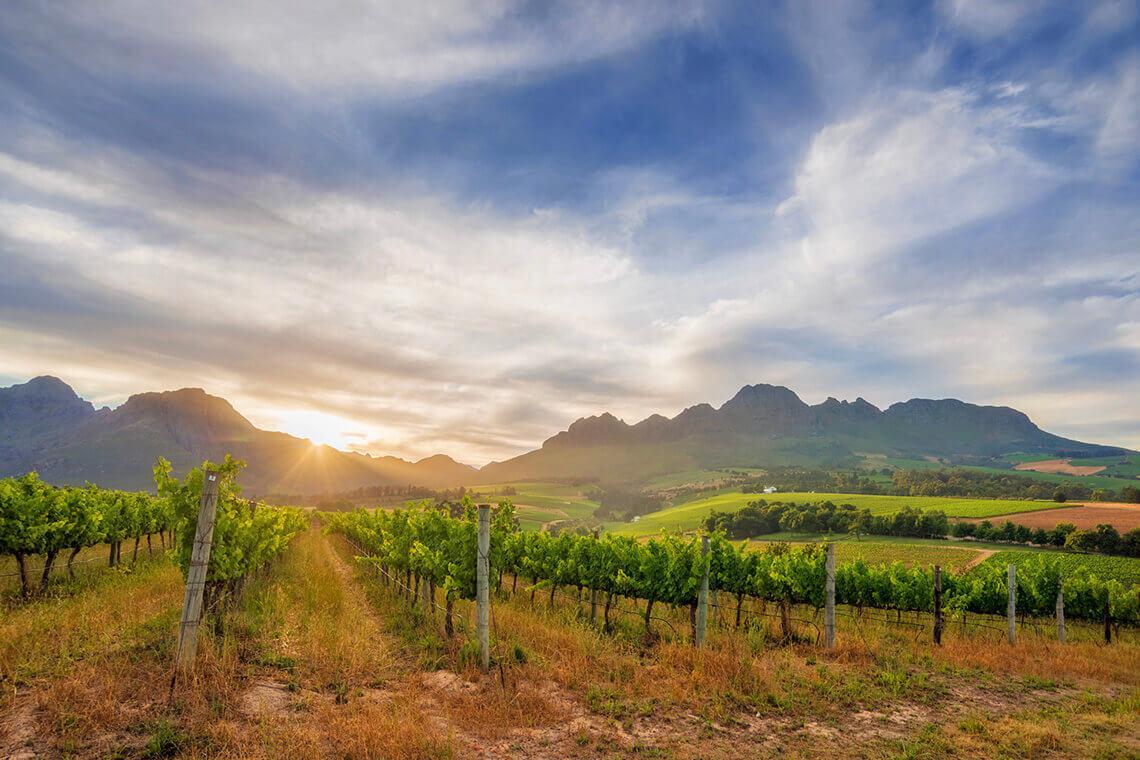 Sip & Read   Rust en Vrede vineyards